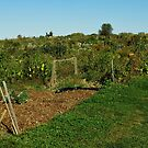 Eagle Heights Community Gardens by AuntieJ