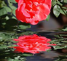 Red Rose by Stormygirl