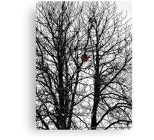 The Empty Nest Canvas Print