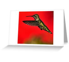 LITTLE RED HUMMER Greeting Card