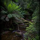 Rainforrest stream by Andrew Wilson