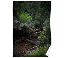 Rainforrest stream Poster