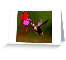 HUMMER IN FLIGHT.....SOLD ART Greeting Card