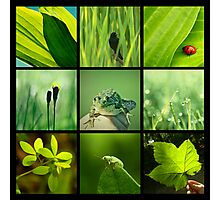 3x3 green b Photographic Print