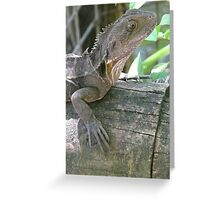 Southern Angle-Headed Dragon (hypsilurus spinipes) Greeting Card