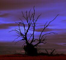 dead tree standing by fazza