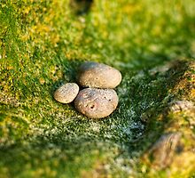 Small rocks on moss by Flux Photography