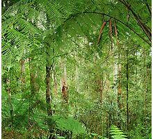 Rainforest - Great Otway National Park Photographic Print