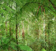 Rainforest - Great Otway National Park by imaginethis