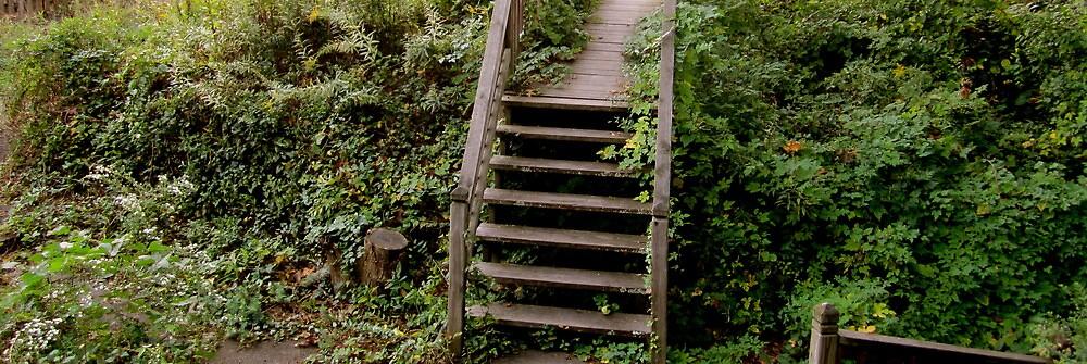 Porch Steps  by Rae Breaux