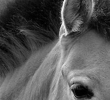 Eyes & Ears by Lin-Ann Anantharachagan