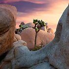 Joshua Tree NP by Cecil Whitt