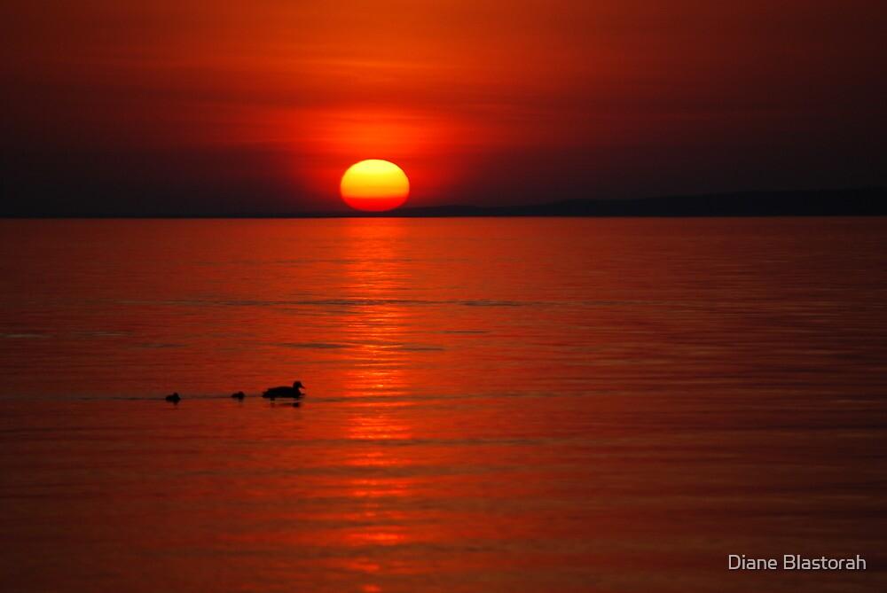 Ducks at Sunset by Diane Blastorah