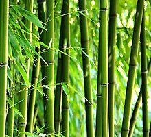Bamboo by Gabi Siebenhühner