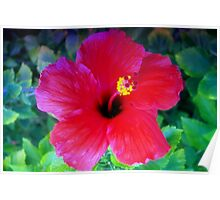 Hibiscus happiness Poster