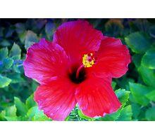 Hibiscus happiness Photographic Print