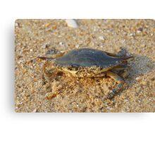 Softshell Crab - Atlantic Ocean Canvas Print