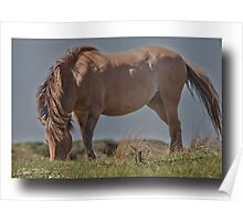 Horse in HDR Poster