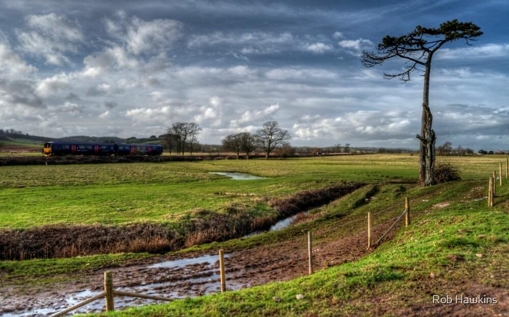 Sprinter at Powderham by Rob Hawkins