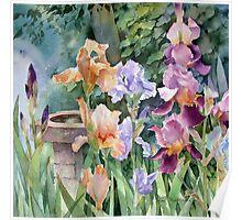 Bird bath and Irises Poster