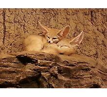 Fennec Fox Love Photographic Print