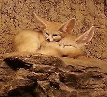 Fennec Fox Love by Prissanthemum