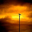 Storm Bird by Luke Griffin