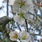 Blossoming of Almond by Nira Dabush