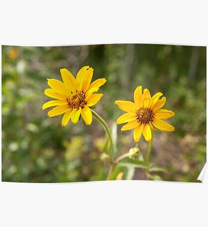 Sunflower Twins Poster