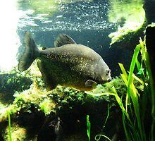 Piranha! by Holly Burns
