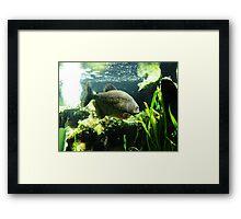 Piranha! Framed Print
