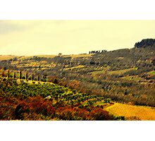 colline di Fiesole Photographic Print