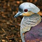 Crested Quail Dove Portrait by Winston D. Munnings