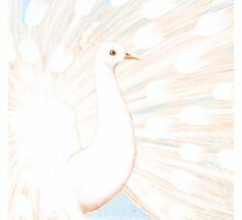 a white peacock by bymuravka