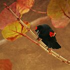 Redwing Blackbird by George  Link