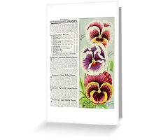 Gorgeous Giant Pansies Greeting Card