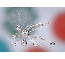 Dandelion explosion Photographic Print