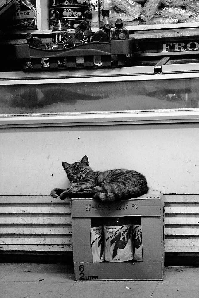 Grumpy Bodega Cat. by rnfox