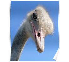The Ostrich Poster