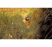 Giova in cerca di asparagi Photographic Print