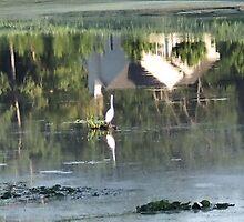 The Pond by k253