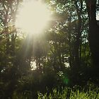 Sunlight Through The Trees by Earth-Gnome