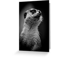 Meerkat doing his best Rudolph Valentino Greeting Card
