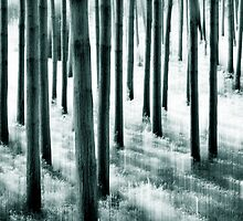 The Pine Grove by Laurie Minor