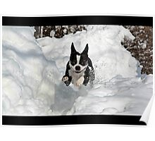 Playing in the Snow Poster