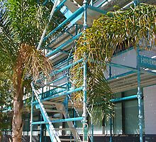 Scaffold and Palms by robertemerald