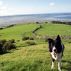Indy above Llanfairfechan by Michael Haslam
