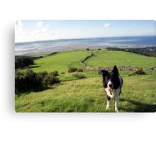 Indy above Llanfairfechan Canvas Print