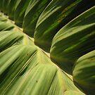 leaf close-up I by theblackazar