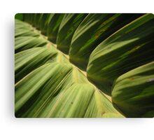 leaf close-up I Canvas Print